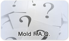 Frequently Asked Questions About Mold (Mold FAQ)